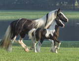 Gypsy Vanner Horse mare and foal by pond - 129949233
