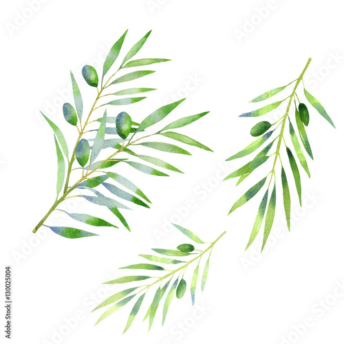 Fototapeta olive branch watercolor. isolated on white background. Hand drawn decorative elements for food design, textile, paper, wrapping