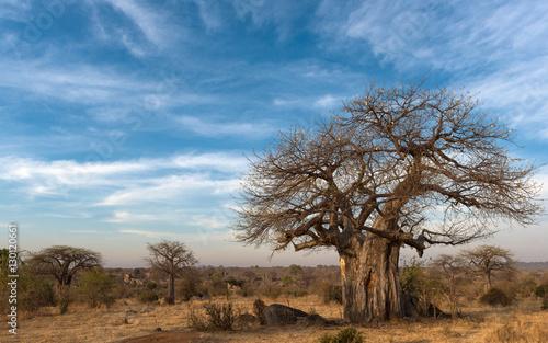 wildlife of Ruaha national park, Tanzania, Africa