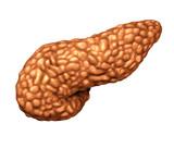 Pancreas Human Organ