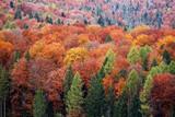 Carpathian forest in autumn