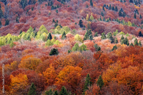 Carpathian forest in autumn Poster