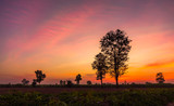 landscape magical sunrise sky with winter silhouette tree nature