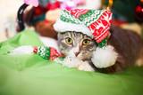Кот в новогодней шапочке под ёлкой