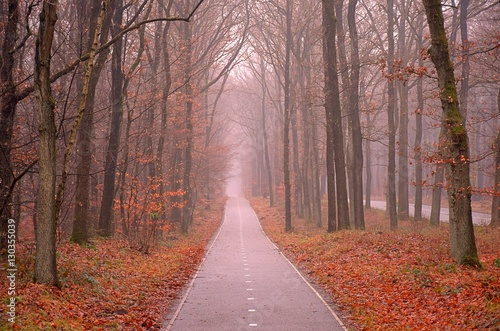 Fototapeta Scenic image of mysterious autumn forest with fog and trail.