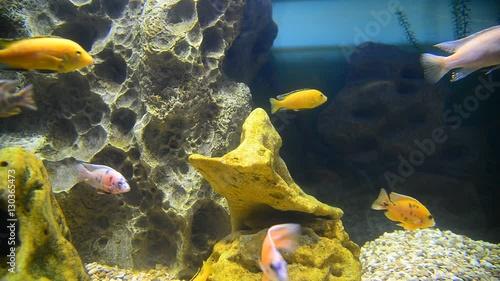 Foto op Plexiglas Indonesië tropical fish and corals in aquarium undervater