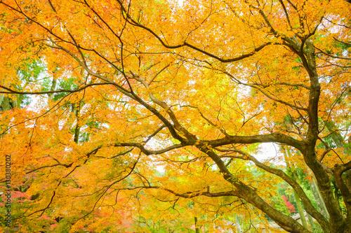 黄色く染まった樹木