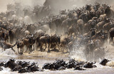 The great wildebeest migration is the movement of vast numbers o