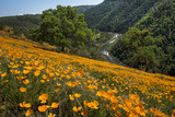 South Fork American River and Poppies