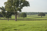 Lush horse farm acreage with paddocks Ocala Florida - 130456270