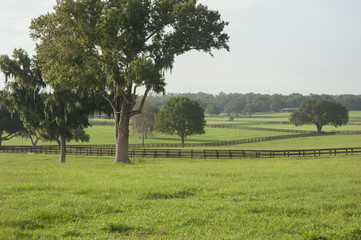 Lush horse farm acreage with paddocks Ocala Florida