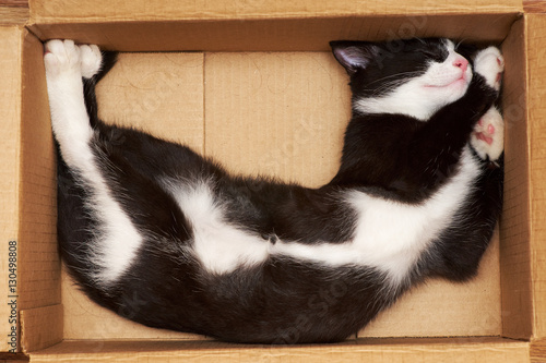 Funny cat sleeping in a box. - 130498808