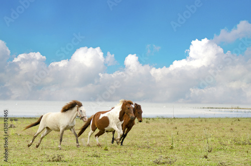 Horses running in a pasture with the blue sky © howtogoto