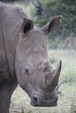 Square Lipped Rhino