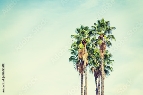 Poster palm trees in Los Angeles in vintage tone