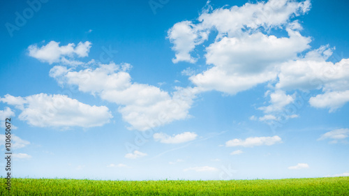 Poster summer green field landscape
