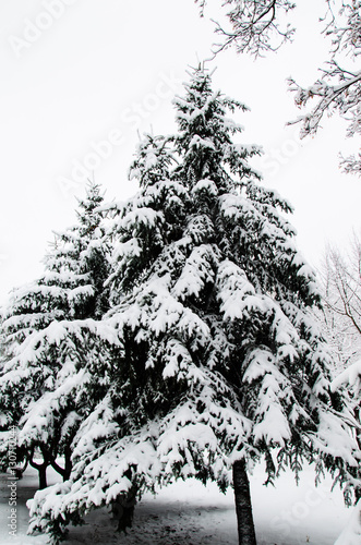 Keuken foto achterwand Vrouw gezicht Fir tree covered with the snow