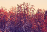 nature landscape winter forest frosted
