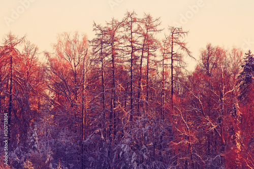 Foto op Canvas Crimson nature landscape winter forest frosted