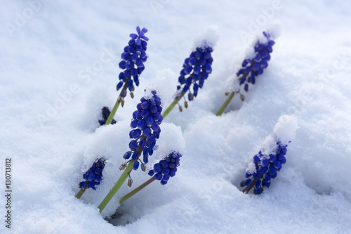 Frühlingsblumen im Schnee Poster