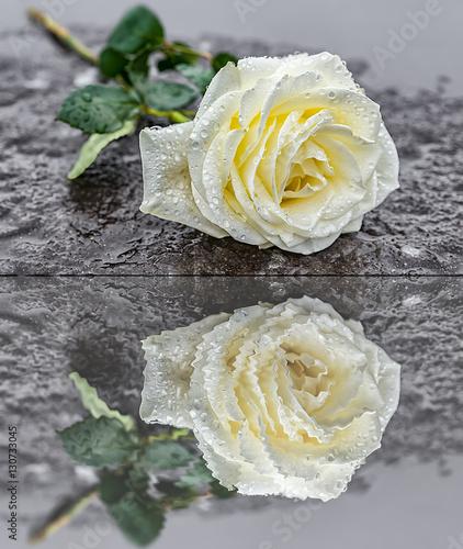 eine auf einem Grabstein niedergelegte gelbe Rose auf gefrorenem Untergrund zum Ausdruck der Trauer und des Gedenkens mit Spiegelung im Wasser