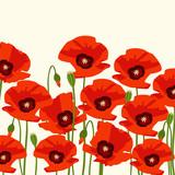 The poppy flowers. Vector illustration