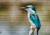 Fototapety Art urbain, Martin-pêcheur