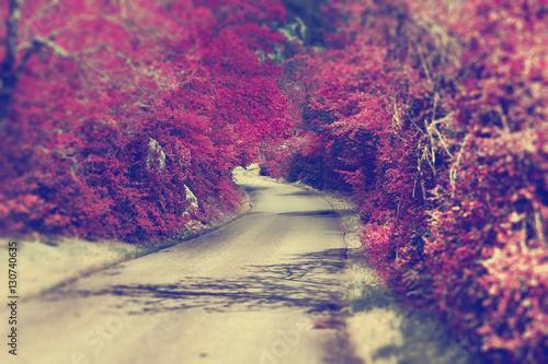 Carretera y bosque en otoño,Paisaje idilico y aventuras por la montaña.Viajes y excursion en la naturaleza.