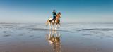 cavalière au galop sur la plage - 130757051