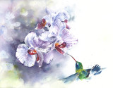 Orchids with hummingbird watercolor painting illustration handmade isolated on white background