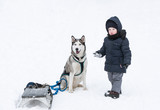 The little boy and dog play in snow.