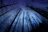 perspective of the dark outline of the dry forest with starry night background