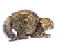 isolated frightened cat