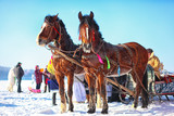 Horses with sledges at the bank of frozen river in wintertime