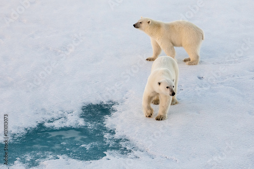 Fotobehang Ijsbeer Polar bear mom with cub on ice