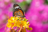 Natural Butterflies and Flowers