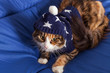 Maine Coon on bed wearing blue night cap with stars