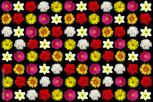 Plagát, Obraz Colors of nature in the ornamental garden of colorful flowers closeup in the collage
