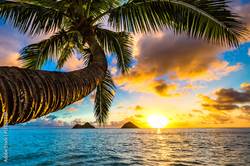 Tuinposter Ochtendgloren Beautiful Hawaiian Sunrise at Lanikai Beach