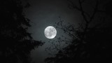Real time night scenic with clouds passing full moon as it rises between two trees in forest.