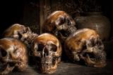 Human skull on old wood background, still life concapt