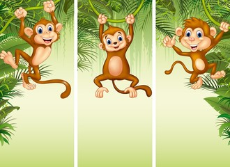 Set of three monkeys in the forest