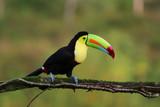 Regenbogentukan in Costa Rica - 131181282