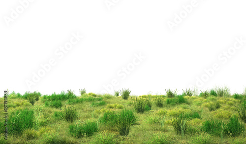Green grass isolated on white background. 3d illustration
