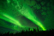 Above the Cloud - Bright aurora beams lit up the cloudy night sky over a boreal forest.