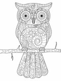 Fototapety Owl on a branch Coloring book vector for adults