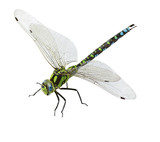 dragonfly isolated - 131308284