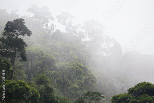 misty jungle forest - 131316889