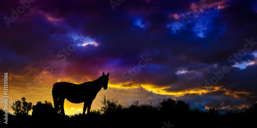 Wild Mustang Horse in the Nevada desert. Plakát