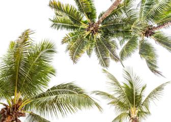palmes de cocotiers sur fond blanc